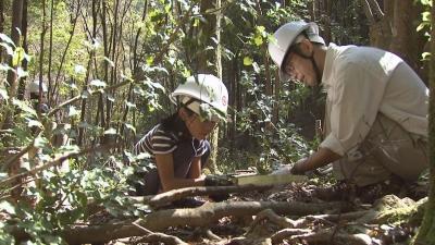 島津製作所の森づくり活動