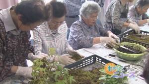 園寿会苔玉つくり00000000