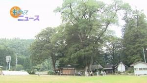天然記念物樹木ツアー00000000