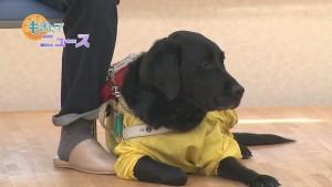 03_盲導犬00000000