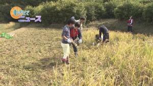 05_稲刈り00000000