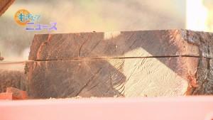 181125天引八幡神社ムクの木製材体験00000000