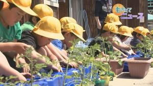 190515美山小学校2年生カラフル野菜の苗植え00000000