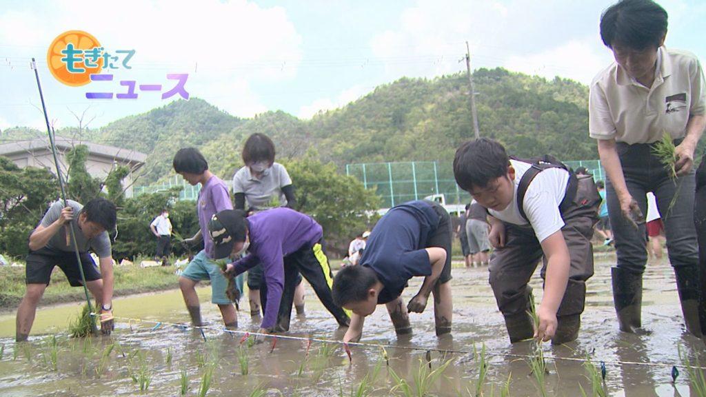 丹波支援学校中学部 米作り学習 米米くらぶ 田植えに汗を流す